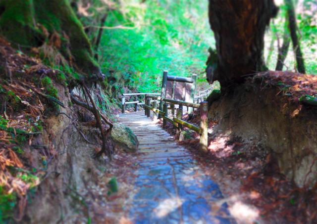 屋久島トレッキングなら四季折々の景色が味わえる