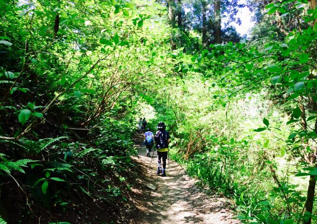 屋久島ガイド・エコツアーは自分のペースで屋久島トレッキングを楽しめます