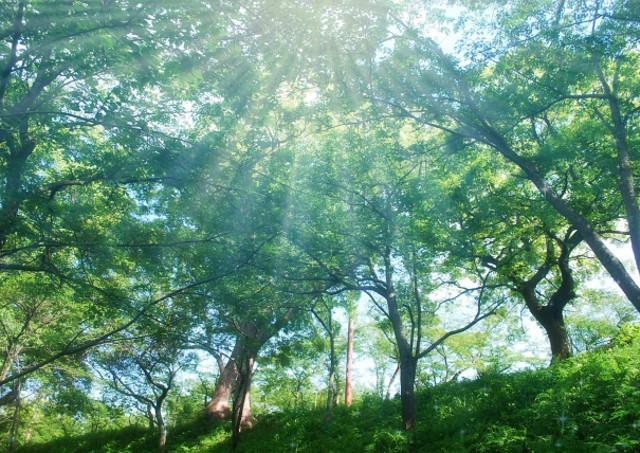 屋久島ガイド・エコツアーはゴールへの達成感だけでなく、自然と触れ合えることも魅力です